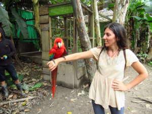 ChakalunaEmotions Voyage liberté Reiki bien-être diététique perroquet
